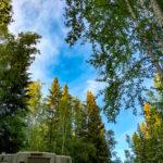 Blick in den Himmel auf dem Cheena River Campground in Fairbanks